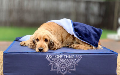JustOneThing365 Dog beds in collab with Little Bean Bag Co & Forged Training