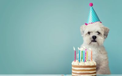 Happy (official) birthday to us!